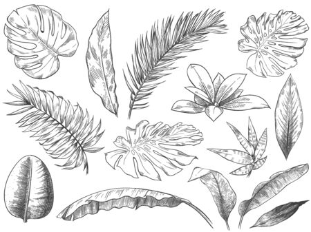 Hand drawn tropical leaves. Sketch tropic plants leafs, hand drawn exotic floral leaf vector illustration set. Exotic outline, line tropic botanical monstera Stock Illustratie