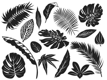 Tropical leaves silhouette. Palm tree leaf, coconut trees and monstera leafs black silhouettes vector illustration set. Monochrome silhouette black tropical jungle greenery