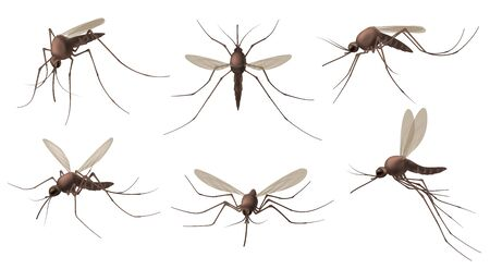 Realistic mosquito. Blood sucking insects, peddler of dengue, zika virus and malaria vector isolated mosquitoes set for repellent spray ad. Realistic mosquito, fly sucker, gnat illustration character