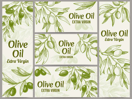 Olive oil banner. Organic oils labels, green olive branches and extra virgin vector label vector illustration set. Engraved plant with leaves for packaging template, sketch branches