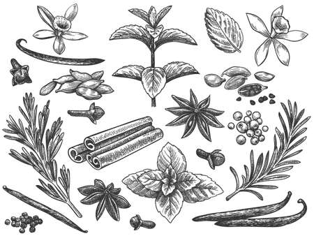 Engraved spices. Cardamom, vanilla flower and pod. mint, black pepper and rosemary, cloves. Indian cooking seeds hand drawn vector set. Ingredients for culinary, cooking herbs seamless pattern