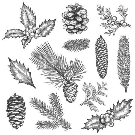 Sketch xmas branch. Christmas plants fir branches, pine cones and holly leaves with berries, boxwood, botanical vintage engraving vector set. Hand drawn spruce tree elements for new year
