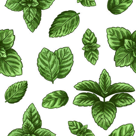 Mint seamless pattern. Green peppermint leaves, spearmint healing herb. Melissa botanical wallpaper print texture. Engraved herbal plant isolated on white background