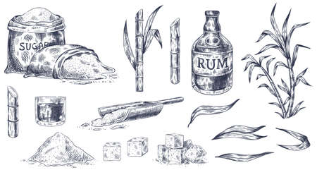 Hand drawn sugar cane. Sketch cane harvest, sugar sack and cubes, stalks sweet leaves organic plants, glass and bottle of rum vintage vector illustration. Product for alcohol drink manufacture Ilustracja