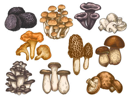 Hand drawn mushrooms. Colorful sketch various edible mushroom truffle, champignon, black and king trumpet, bolete vegan product vector set. Vegetarian ingredient for cooking, organic food g Ilustracja