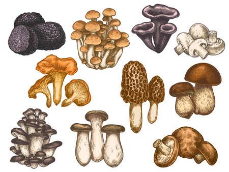 Hand drawn mushrooms. Colorful sketch various edible mushroom truffle, champignon, black and king trumpet, bolete vegan product vector set. Vegetarian ingredient for cooking, organic food g Illustration