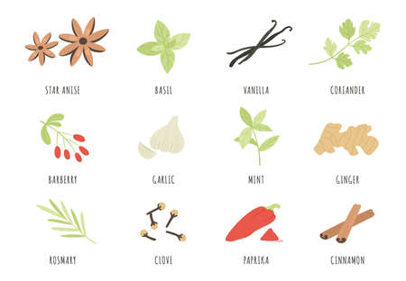 Spices. Hand drawn herbs and spices star anise, basil and ginger, garlic. Cinnamon, vanilla and paprika, mint and rosemary, clove vector set. Aromatic ingredients and flavors for cooking and culinary 向量圖像