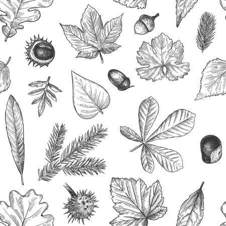 Autumn leaves seamless pattern. Hand drawn fallen leaf, acorns, cones print for textile. Wallpapers, gift wrap or scrapbook vector texture. Engraved foliage, leaves and spruce needles