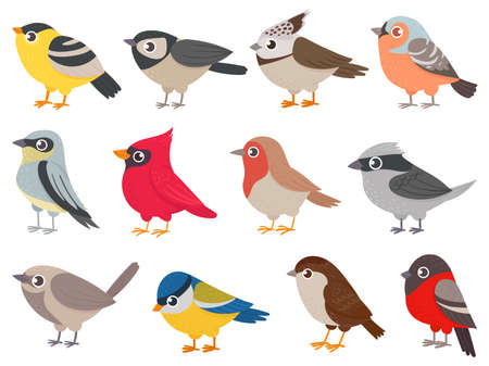 Cute birds. Hand drawn little colorful birds, animals characters for print card, garden decoration. Elements for childish poster vector set. Bird nature drawing, fauna animal natural zoo illustration