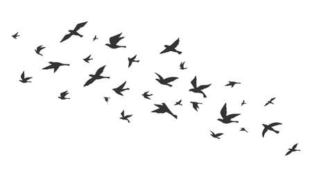 Flying bird. Free birds flock in flight black silhouettes. Tattoo image, freedom symbol wildlife vector illustration. Black animal group silhouette, birds in air