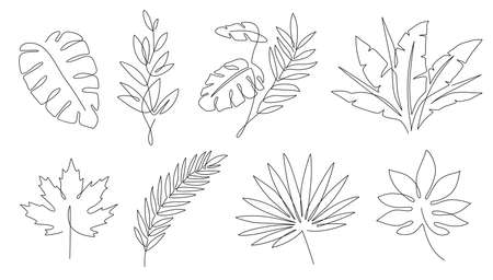 Tropical leaves. Palm tree and maple linear leaf. Tropic jungle and beach floral abstract elements continuous line exotic plant vector set. Summer leaf palm, jungle foliage and tropical illustration