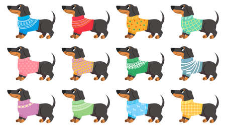 Dachshund clothes. Dogs wear with trendy patterns, puppy in various sweaters. Cute pets, dachshunds fashion cartoon vector set. Winter colorful clothing for isolated animals on white Stock fotó - 155570862