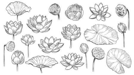 Lotus. Sketch floral composition lotus flowers and leaves, magic flower life symbol, black outline botanical plant hand drawn vector set. Beautiful blossom, bud with petals and leaves Ilustração