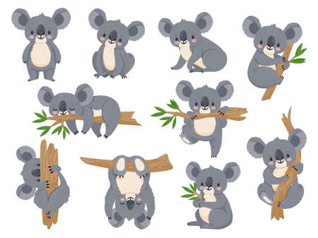 Cute cartoon koala. Lazy koalas with eucalyptus. Little funny rainforest animals. Australian bear sleeping on tropical tree vector set. Lazy koala cute and tree eucalyptus, character cartoon wildlife
