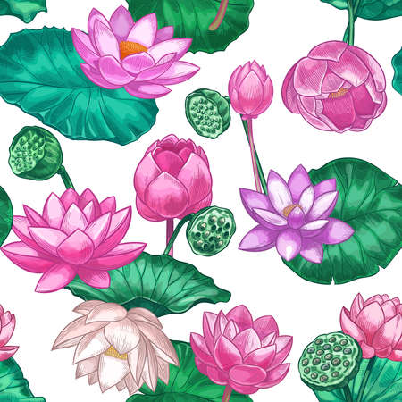 Pink lotus seamless pattern. Gentle water lily flowers, pink lotus. Decorative tropical design for ayurveda care products vector texture. Seamless blossom flower and flora design illustration Illustration