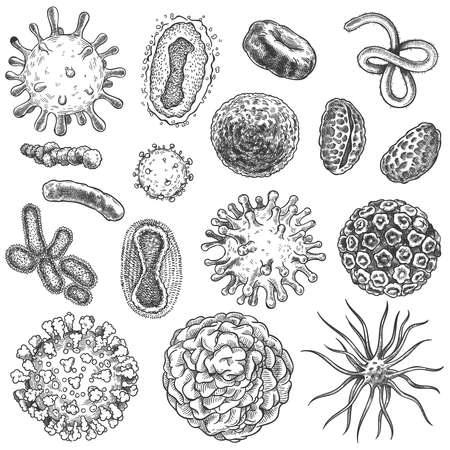 Sketch virus. Bacteria, coronavirus germ biology micro organic elements. Covid-19 viruses, cancer cells hand drawn engraving vector set. Illustration germ micro, covid-19 drawn sketch microbe