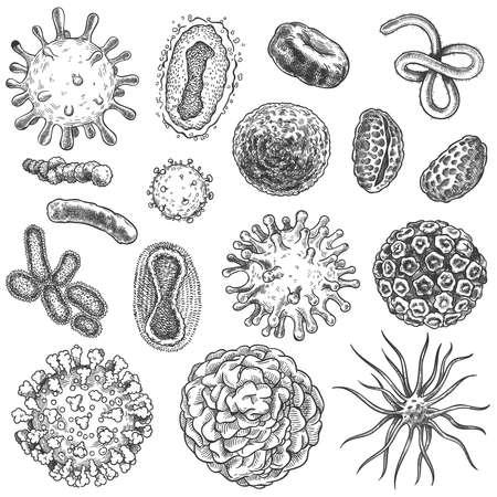 Sketch virus. Bacteria, coronavirus germ biology micro organic elements. Covid-19 viruses, cancer cells hand drawn engraving vector set. Illustration germ micro, covid-19 drawn sketch microbe