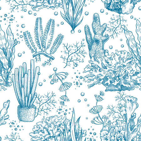 Seaweed seamless pattern. Reef aquatic plants and corals, underwater sea and aquarium life nautical japanese, chinese sketch vector texture. Illustration laminaria botanical seamless nautical pattern