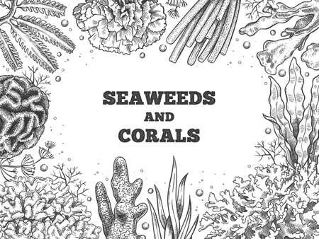 Seaweed background. Reef aquatic weed and corals, underwater ocean and aquarium life. Marine japanese, chinese food sketch vector poster. Illustration banner reef and underwater aquatic sketch