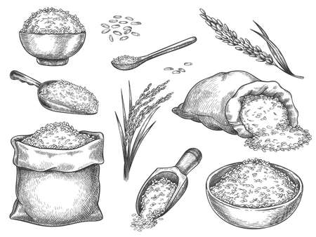 Sketch rice grains. Vintage seeds pile and farm ears. Whole basmati grain in bag, scoop and spoon. Rice porridge bowl. Hand drawn vector set. Illustration healthy ingredient, meal nutrition drawing Stock Illustratie