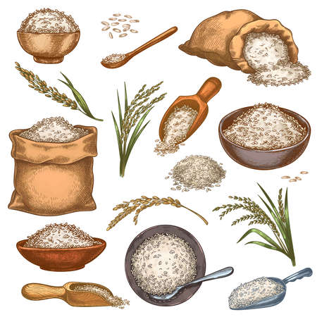 Rice sacks and cereals. Vintage bags, bowls and scoops with grains. Ear spikes and seed pile. Colorful engraved farm organic food vector set. Cooking rural products in heaps. Package with food
