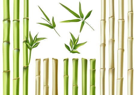 Realistic bamboo sticks. 3d green and brown branches, stem and leaves. Nature botanical hollow canes. Asian bamboo eco decoration vector set. Fresh green foliage, natural, organic plants