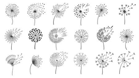 Blowing dandelion seeds. Silhouettes of fluffy wish flowers, spring blossom dandelions blown by wind.