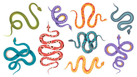 Wild snakes. Colorful coral snake tattoos with abstract and natural patterns. Viper, anaconda crawl and hiss. Poisonous serpent vector set