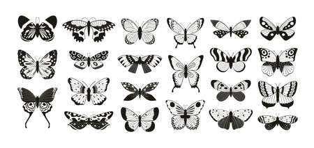 Butterflies silhouettes. Moth and butterfly wings pattern laser cut outline. Flying insect decorative element. Butterflies tattoo vector set