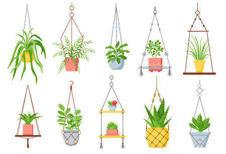 Home plant in hanging pot. Houseplant, succulent and cactus in pots on macrame rope. Decorative plants in cozy scandinavian style vector set