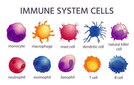 Immune system cell types. Cartoon macrophage, dendritic, monocyte, mast, b and t cells. Adaptive and innate immunity, lymphocyte vector set Vektoros illusztráció