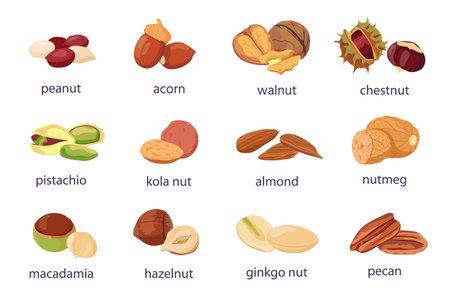 Cartoon nuts. Walnut, hazelnut, pistachio and peanut icon. Healthy organic almond, acorn, ginkgo and kola nut. Food natural snack vector set 向量圖像