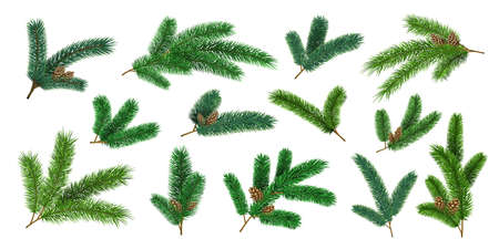 Realistic christmas tree branches and fir twigs with pinecone. Evergreen xmas pine decoration garlands. 3d forest pines needles vector set