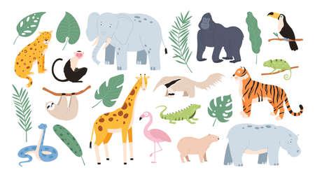 Flat tropical animals from african savannah and jungle forest. Cartoon tiger, monkey, flamingo, elephant and sloth. Safari animal vector set