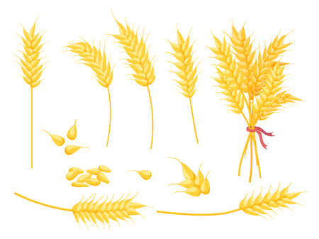 Cartoon ripe gold wheat plant, grain and ear. Yellow single spikelet, bouquet and seed. Farm crop, bakery and agricultural symbol vector set 向量圖像