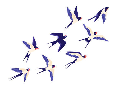 Flat small swallow bird flock flying in air. Cartoon group of barn swallows freedom flight in sky. Peaceful vector illustration with birds