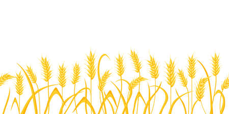 Cartoon farm field background with golden wheat spikes. Agriculture cereal crop ears. Rural scene with grain harvest vector border pattern 向量圖像