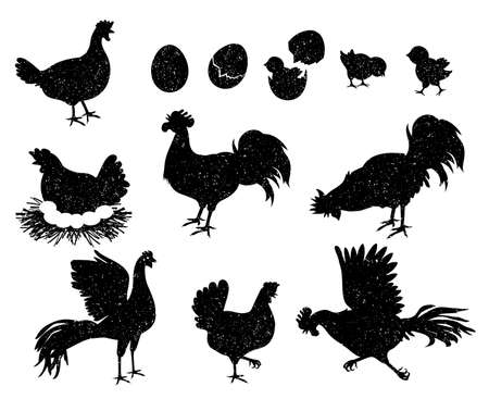 Rooster, hen and chicken silhouettes for vintage and labels. Poultry icons for meat and egg products. Domestic birds family vector set