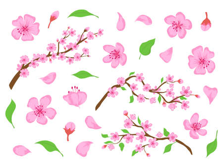 Blossom sakura pink flowers, buds, leaves and tree branches. Spring japanese cherry floral elements. Apple or peach bloom flower vector set