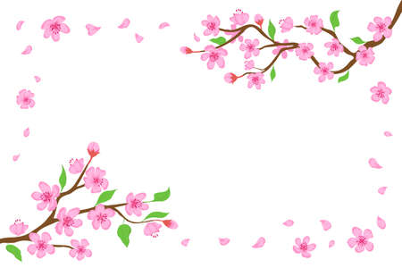Cartoon japanese cherry blossom and falling petals background. Sakura branches with pink flowers banner Blooming spring tree vector frame