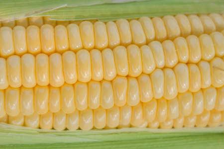 corncob: corncob close up
