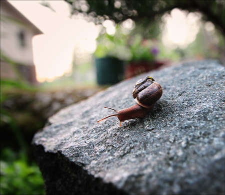 A snail on a stone. Summer. Evening shooting Фото со стока