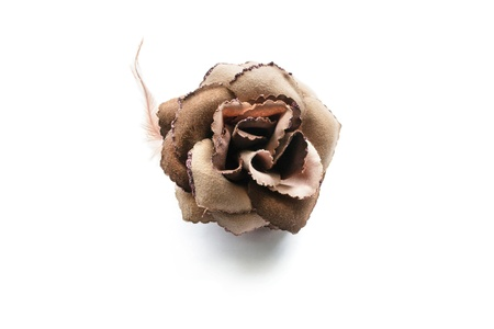 Brown velvet rose with a feather isolated over white photo