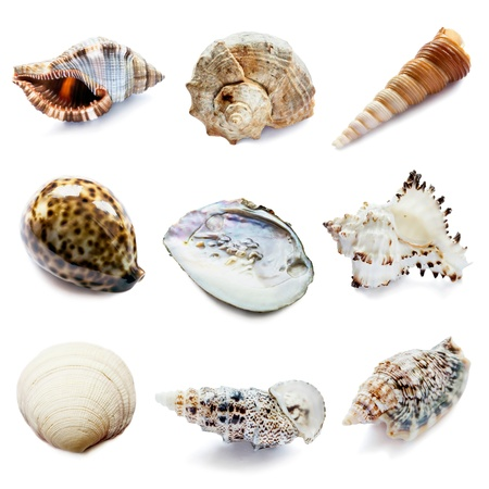 Set of nine different natural seashells on white background photo