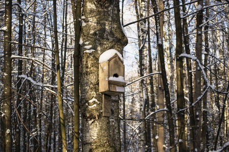 Wooden birdhouse in winter forest photo