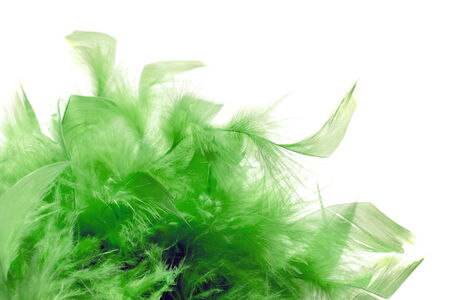 Bright green plumage isolated over white