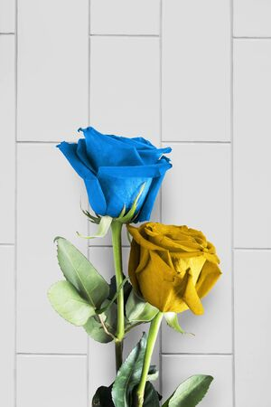 floristics: Blue and yellow roses over brick wall as a background