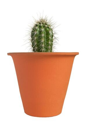 Small houseplant cactus in a pot isolated over white 写真素材