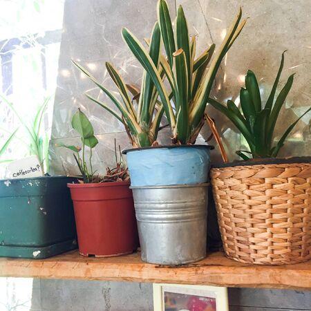 flowerpots: Flowerpots in coffee shop Stock Photo