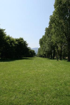 poplars: Poplars and canals